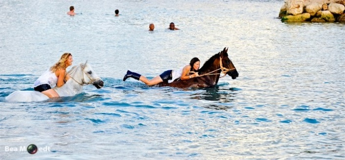 Swimming with Horses 1