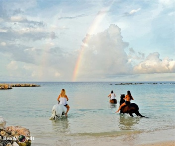 Swimming with Horses 13