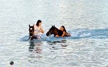 Swimming with Horses 15
