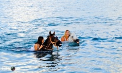 Swimming with Horses 7