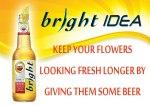 Amstel Bright_GreatFertilizer
