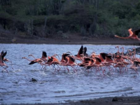 Flamingo Sanctuary.