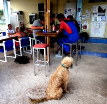 Serka Norman_Front_Dog