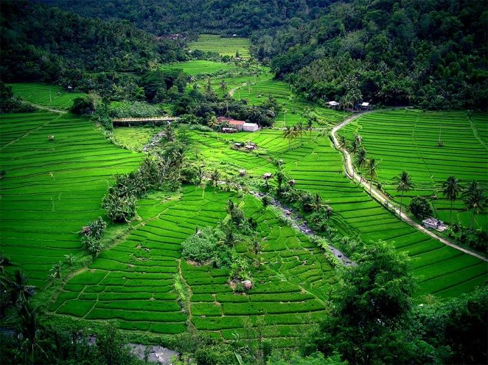 Rice terraces in Bali. Source: www.famouswonders.com/bali-and-its-attractions/