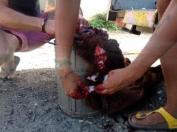 Fake bloody goat in the making... Juicy!