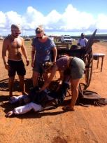 Dummy stunt double recovering from its run