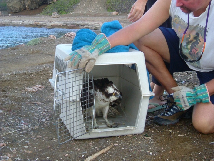 curacao animal rescue and education (26)