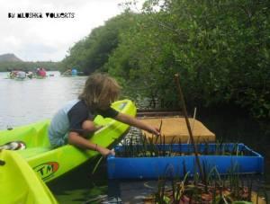 Ryan's son planting some mangroves.