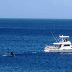 Taken near Playa Kalki. Photo by Dan McGuire.